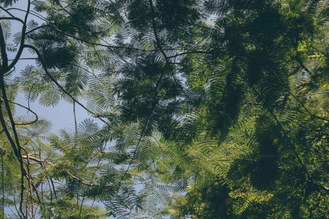 Naturkosmetik – die besten Marken und Shops