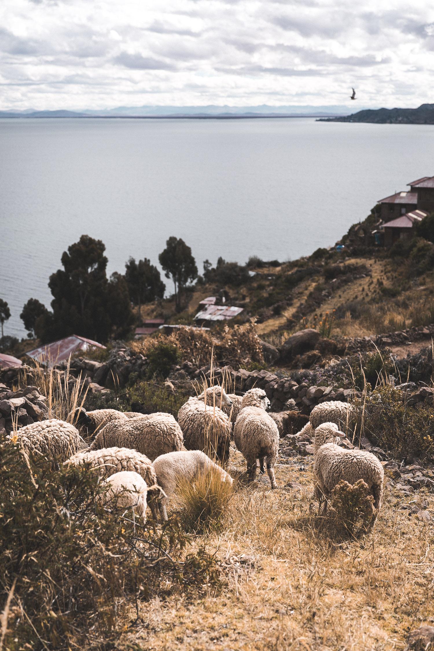 Titicacasee, Peru
